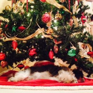 Merry Christmas from Tilly who we found under the tree!